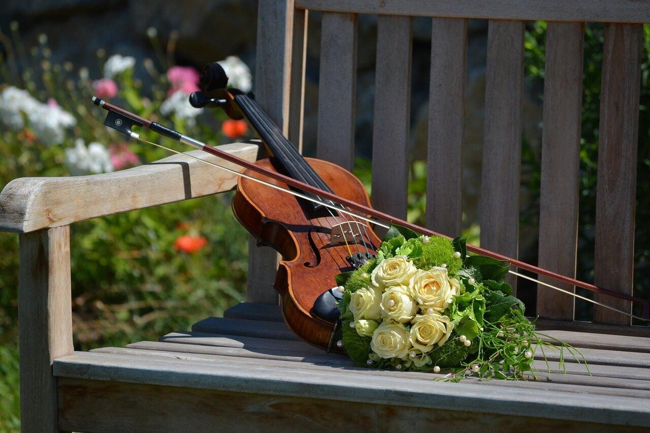 violin and violin bows concept